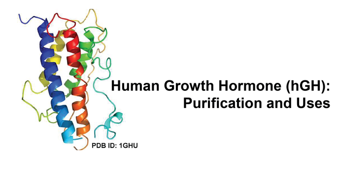 Human Growth Hormone (hGH)- Purification and Uses