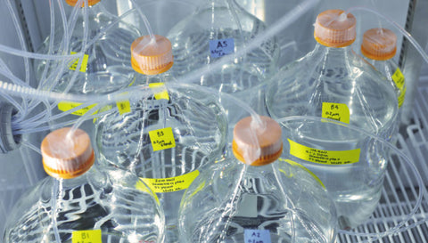 denaturing conditions