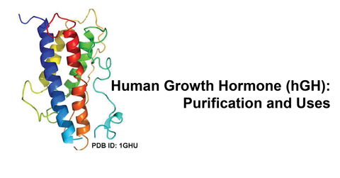 hgh purification and uses
