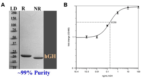 hgh purity and activity assay images
