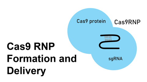 cas9 rnp formation and delivery