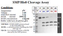 Load image into Gallery viewer, SUMO Protease