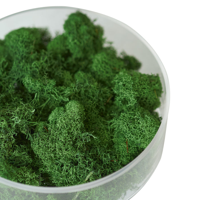Preserved Reindeer Moss - Dark Green - 6 oz