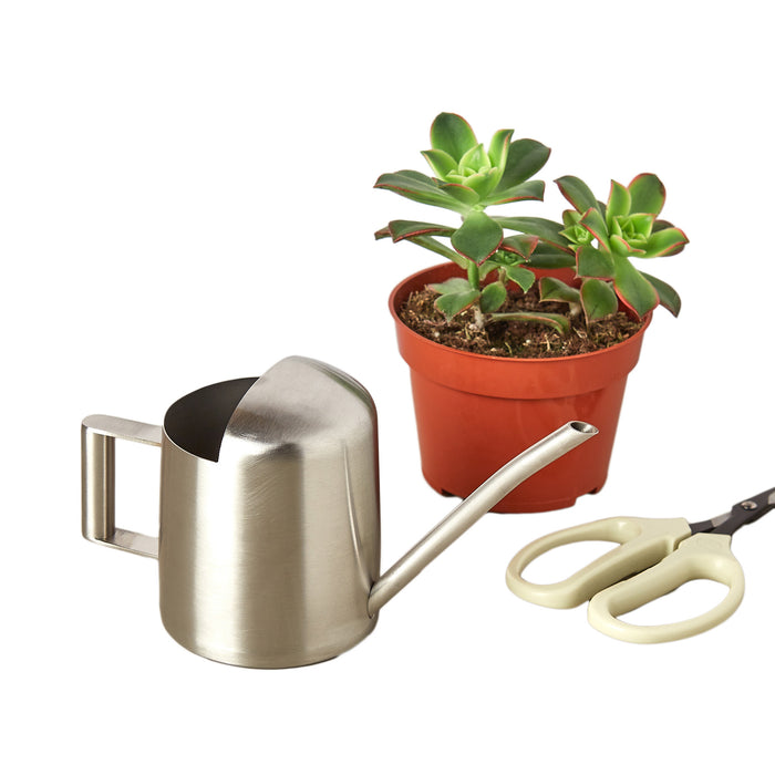 Small Stainless Steel Watering Can