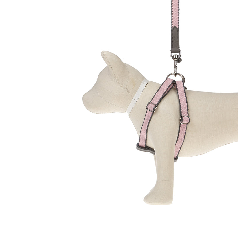 Ring Dog Harness Preppy