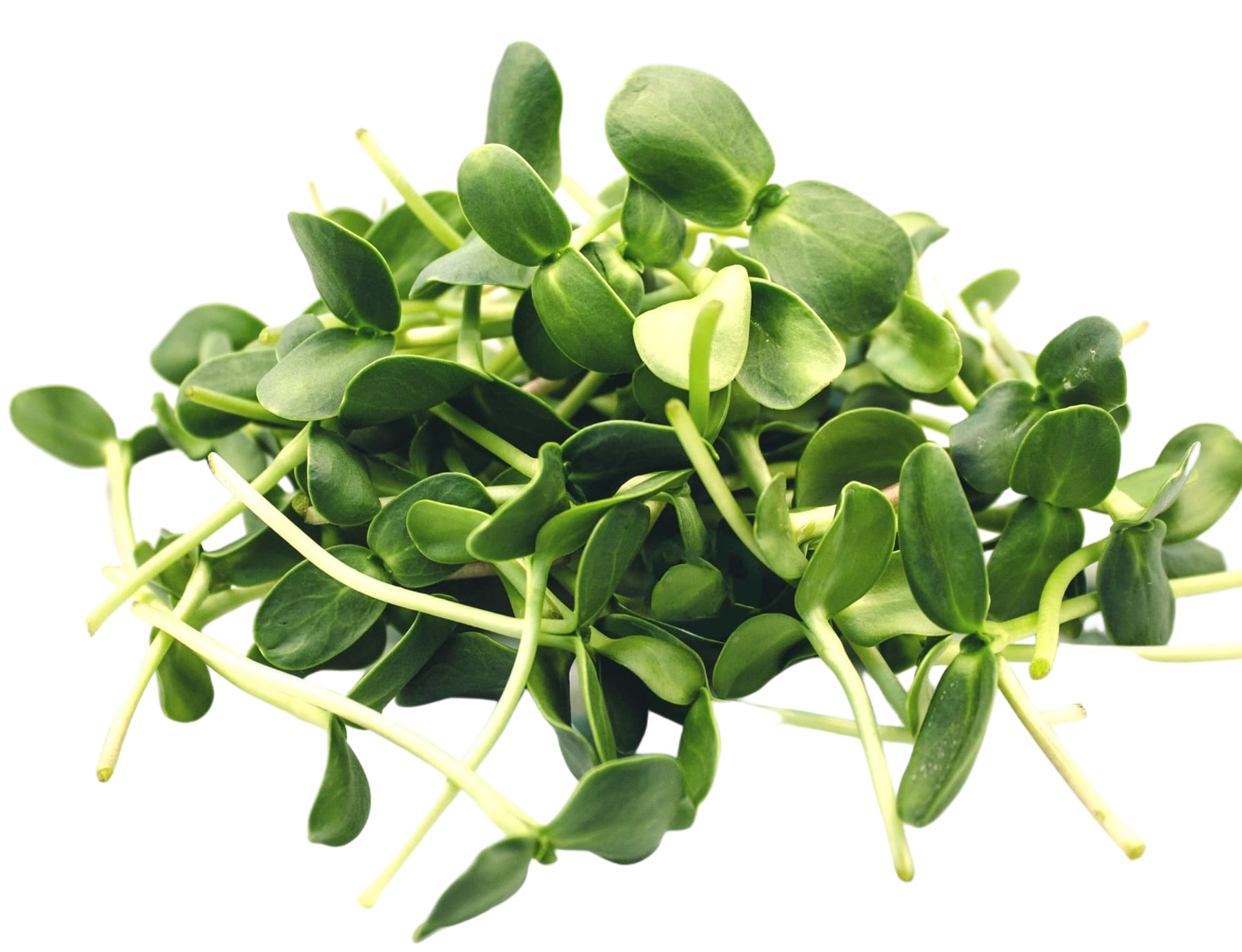 "Microgreen ""Sunflower"""
