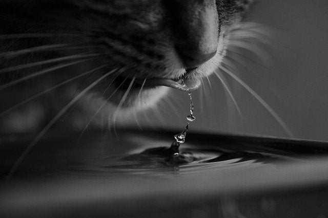 How to get my cat to drink water