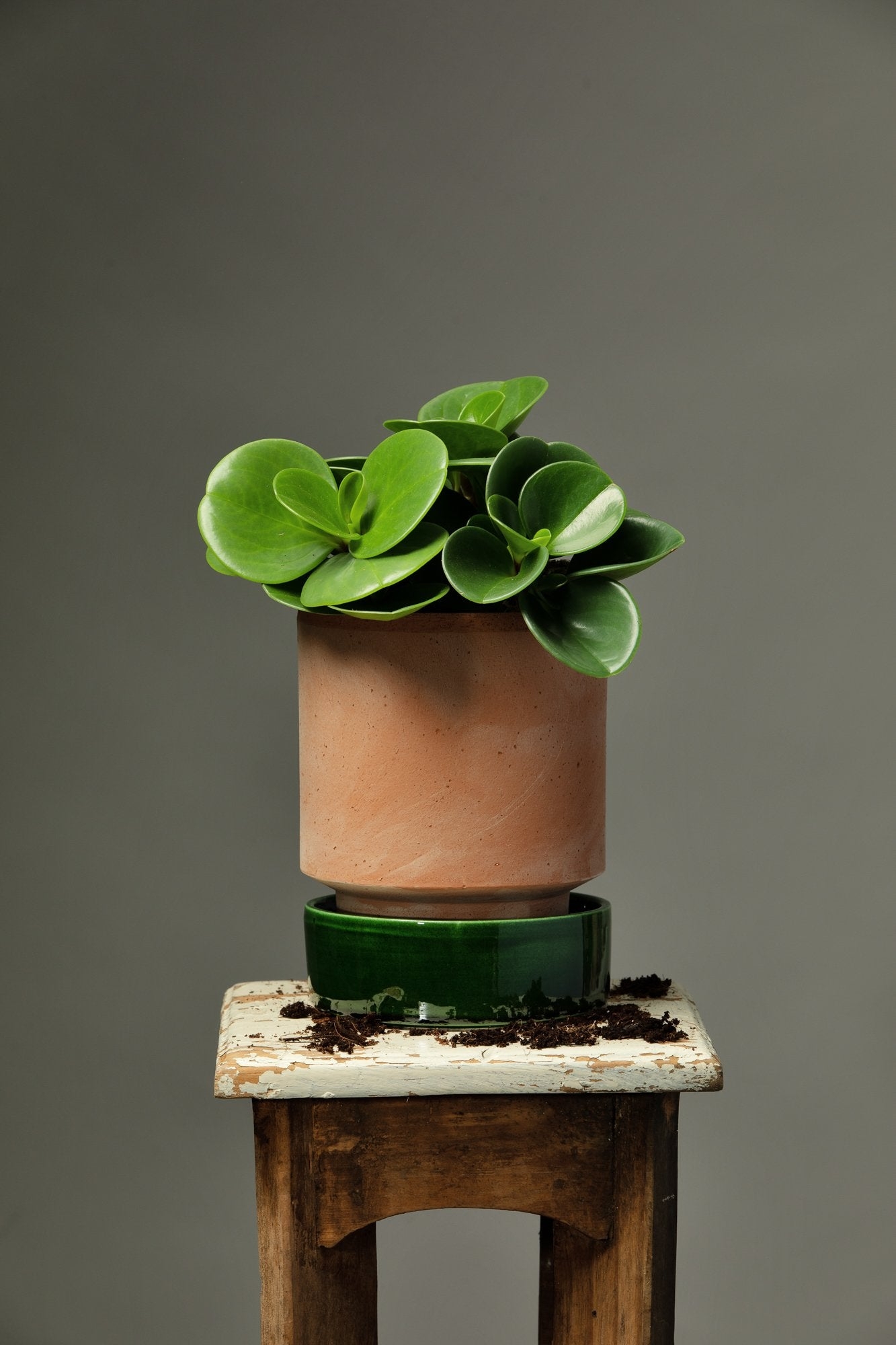 A Baby Rubber Plant house plant repotted in a Berg's Hoff terracotta houseplant pot, with a glazed emerald green pot dish.
