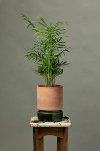 Chamaedorea Elegans office plant in a Berg's Hoff Rosa indoor plant pot with a glazed Emerald Green pot base.