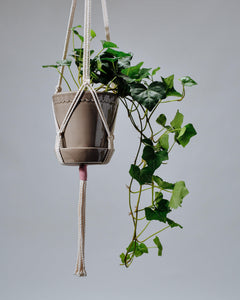 Knotted macrame hanger holding a Helena Glazed pot with an Irish Ivy plant.