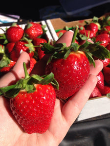 Ripe Strawberry Collection