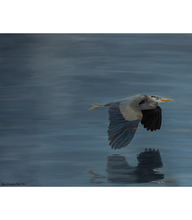 Load image into Gallery viewer, Great Blue Heron