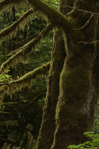 Cathedral Grove Rainforest 2