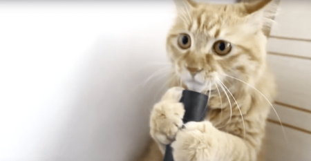 Hilarious Cat Reaction To Vacuum Cleaner