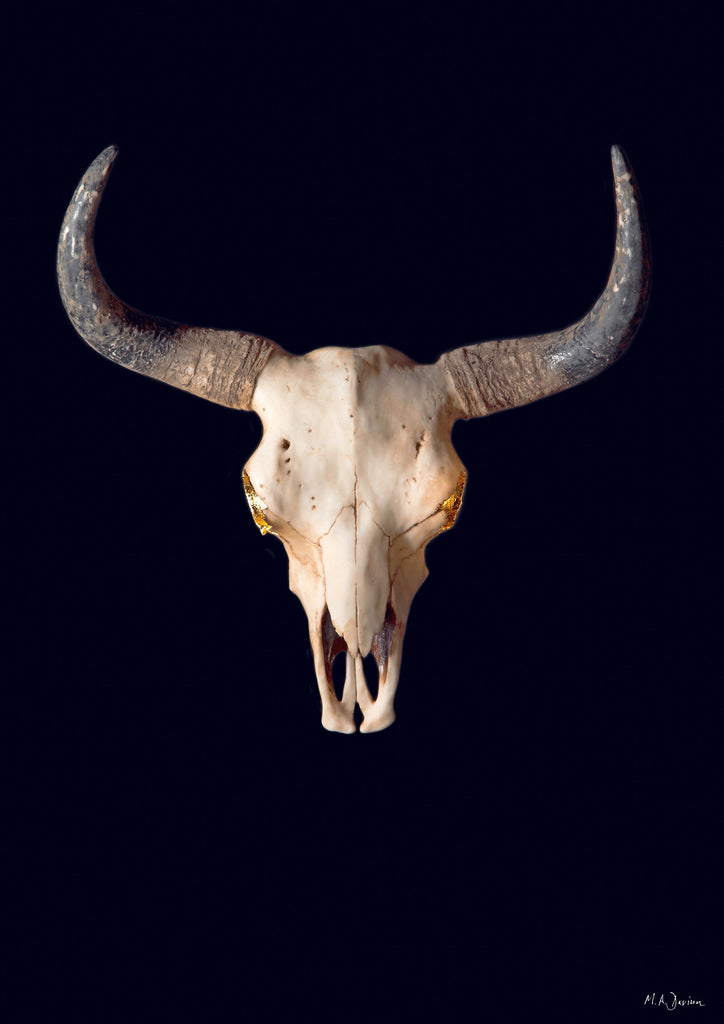 Bison Skull and Gold Leaf - Vanitas - Print - Photography