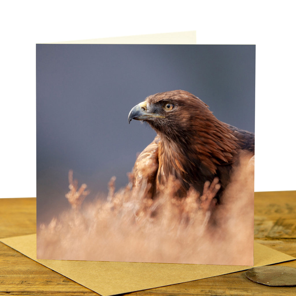 Golden Eagle Greeting Card - Golden Eagle in Heather