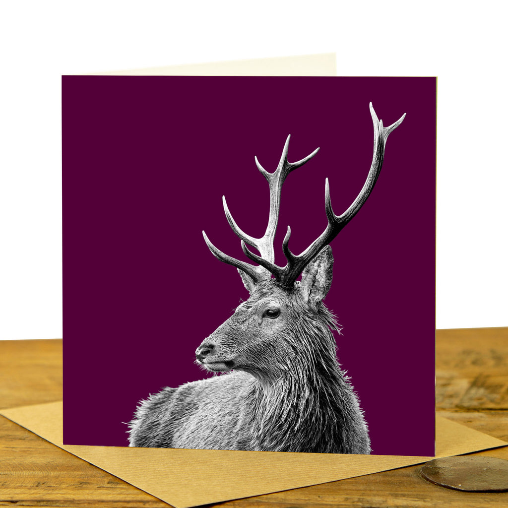 Highland Stag Greeting Card - Claret