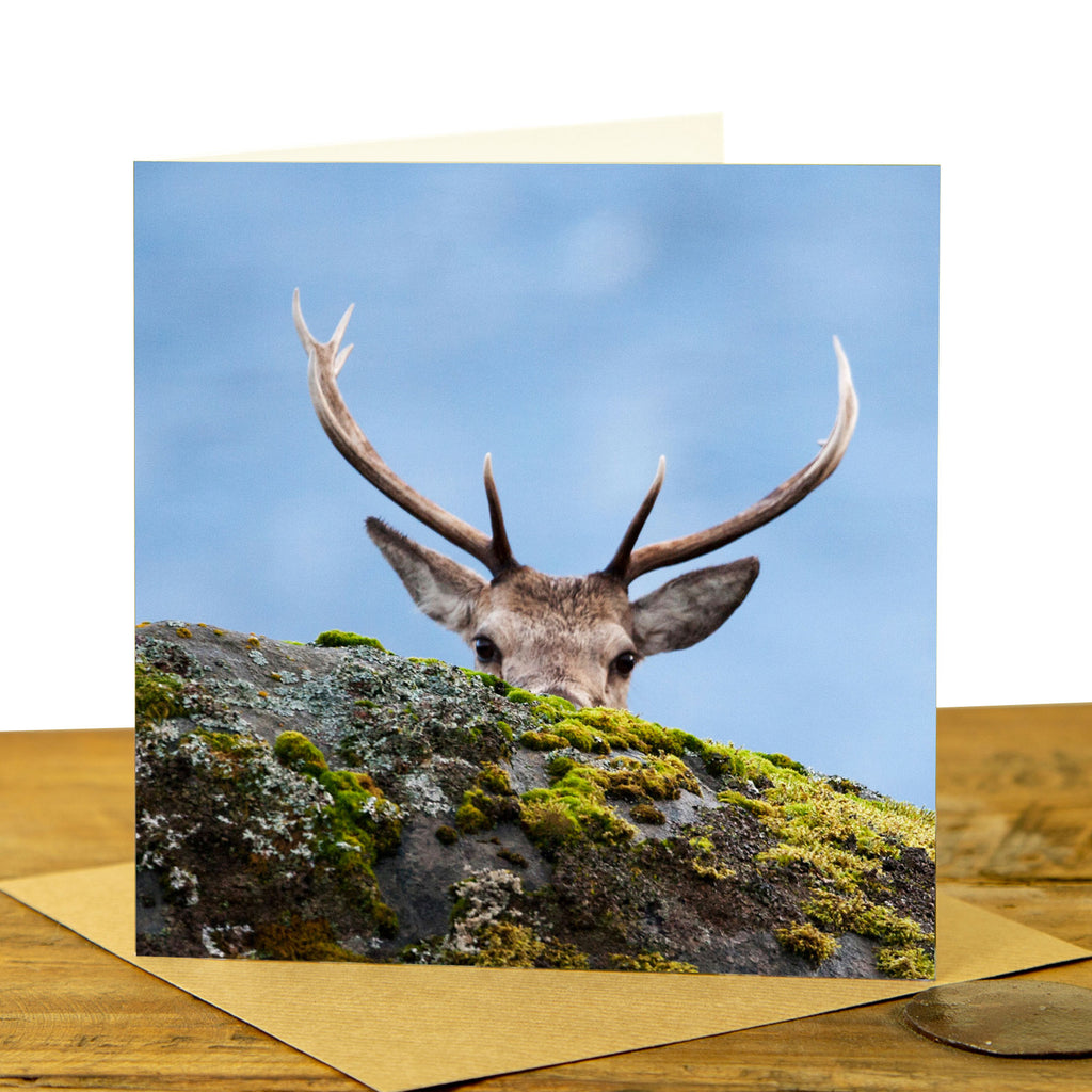 Highland Stag Peekaboo Card
