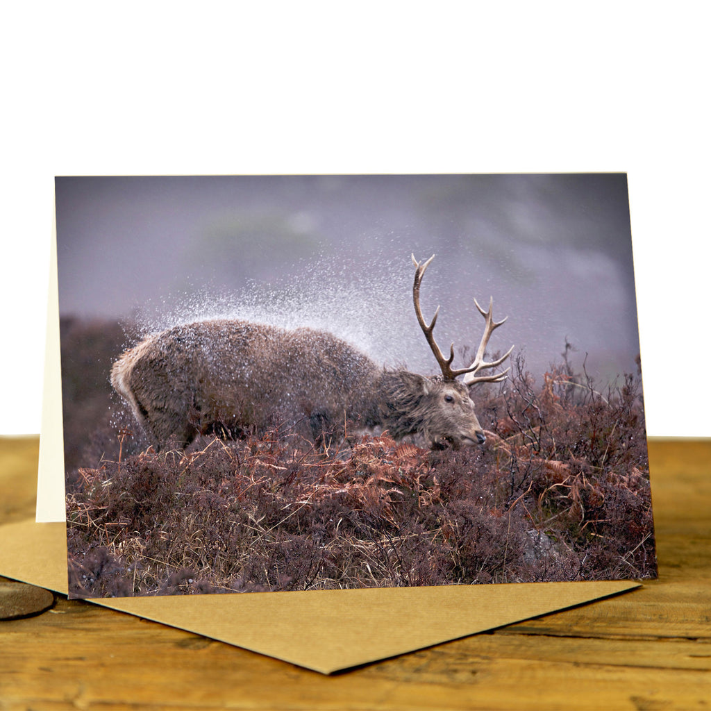 Highland Stag Card - Stag Shaking Off the Rain