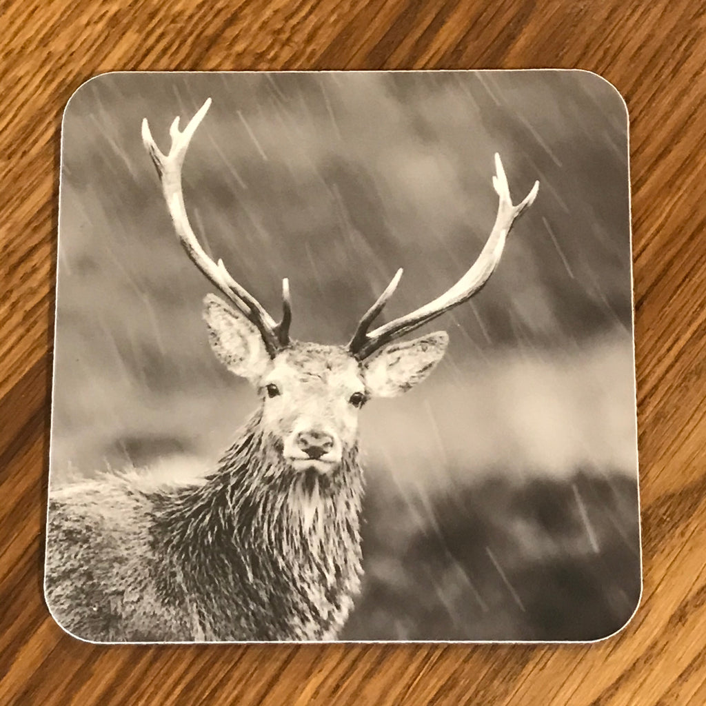 Highland Stag in the Rain Coaster
