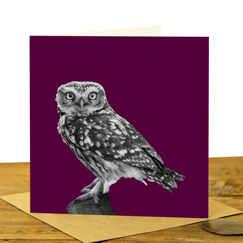 Little Owl Card - Little Owl Standing - Claret