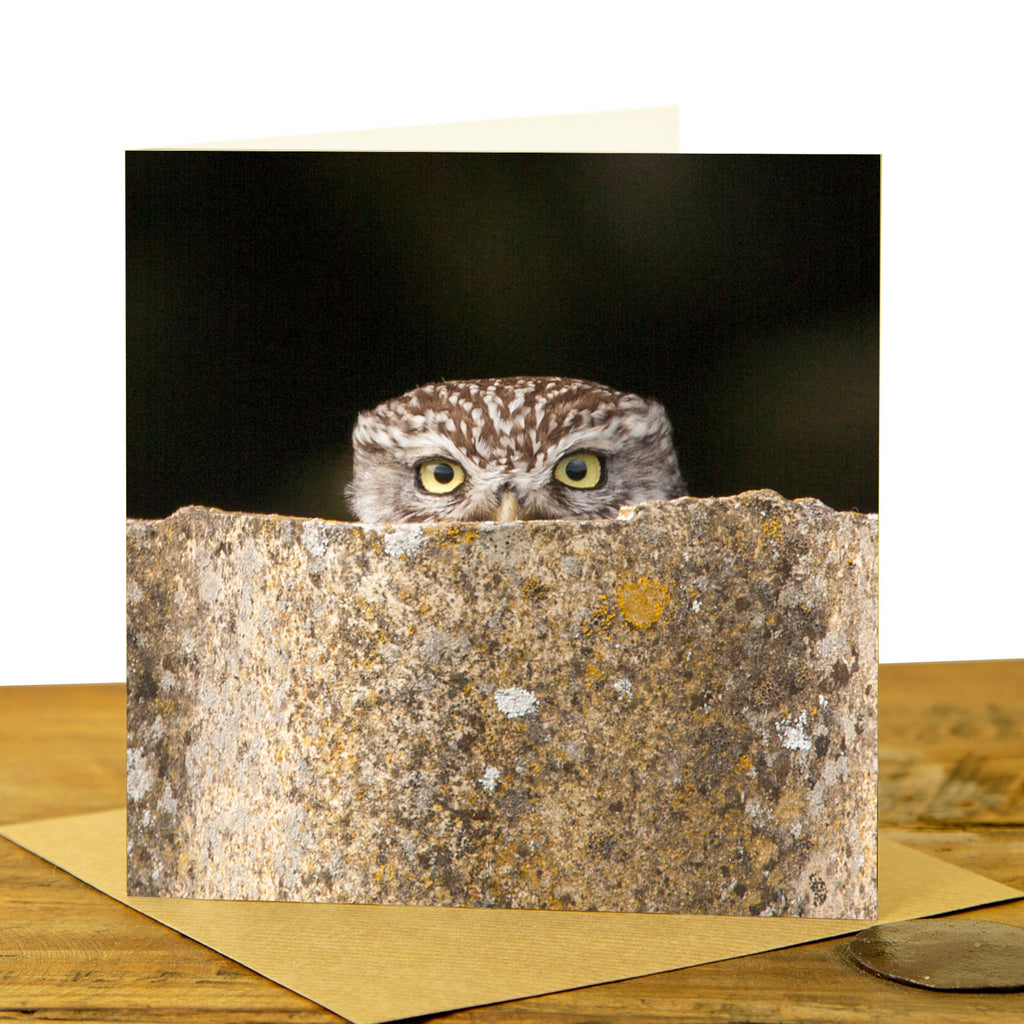 Little Owl Peeking Card - Colour