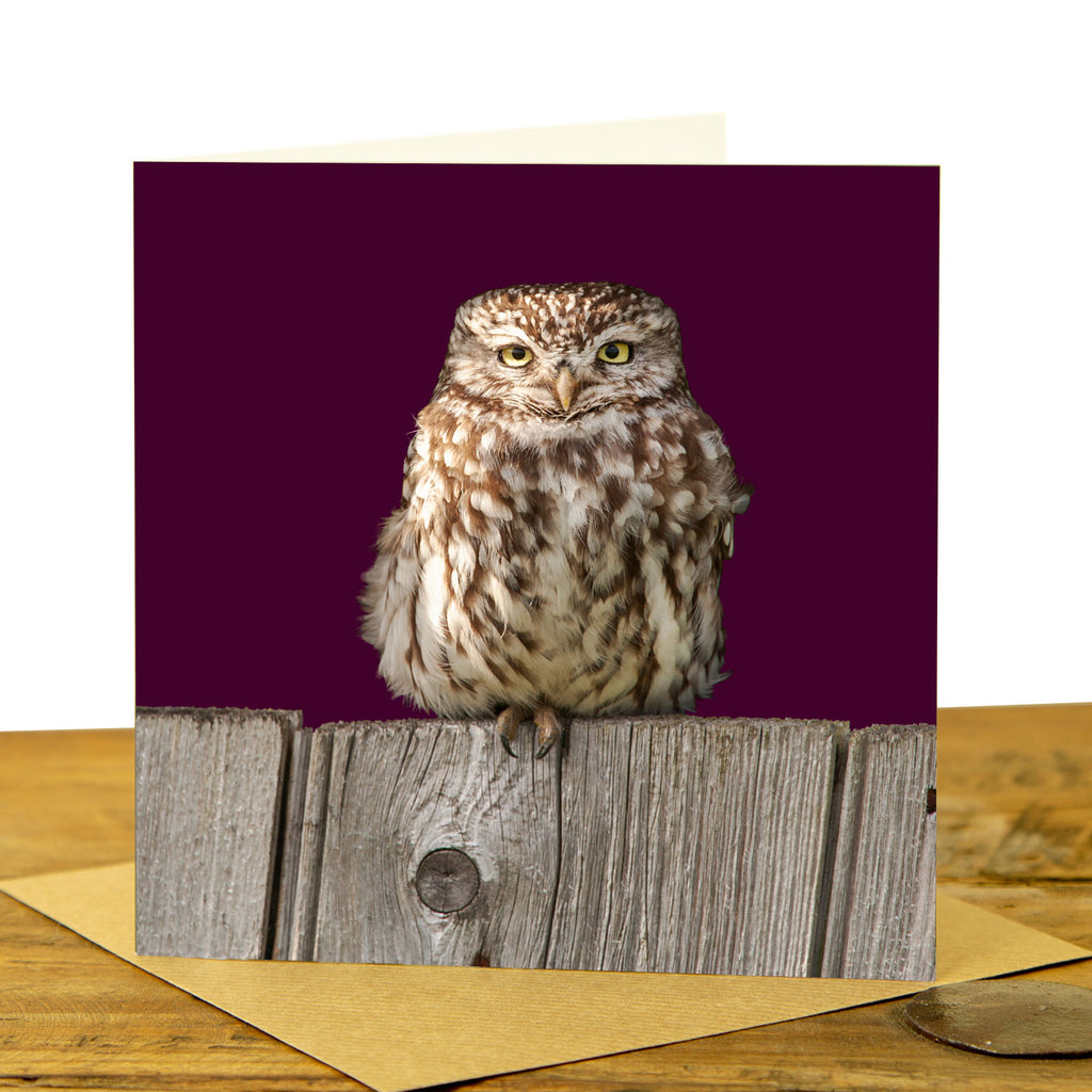 Little Owl Greeting Card - Little Owl on the Fence