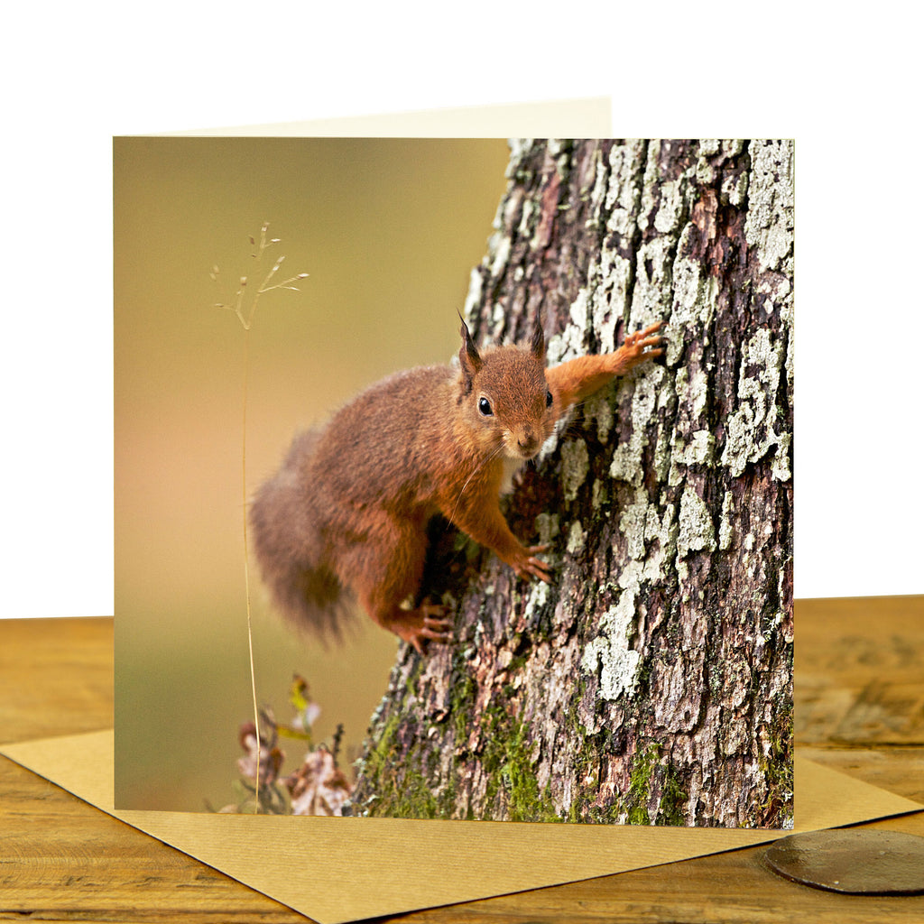 Red Squirrel Greeting Card - Squirrel on tree
