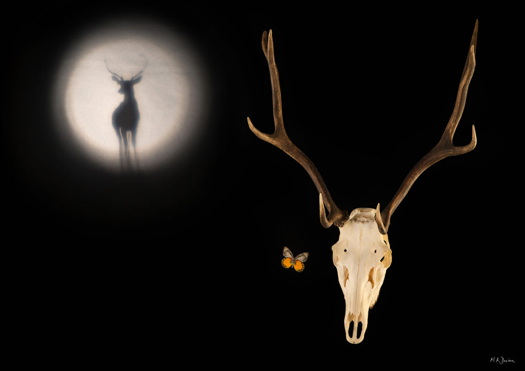 Stag Skull, Moon and Butterfly - Vanitas Photography