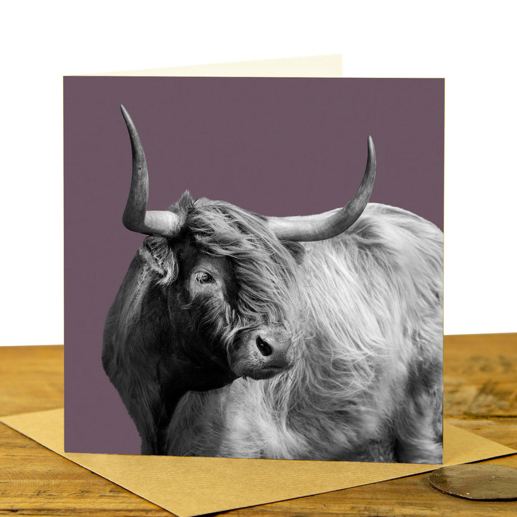 Windswept Highland Cow Greeting Card - Dusky Pink