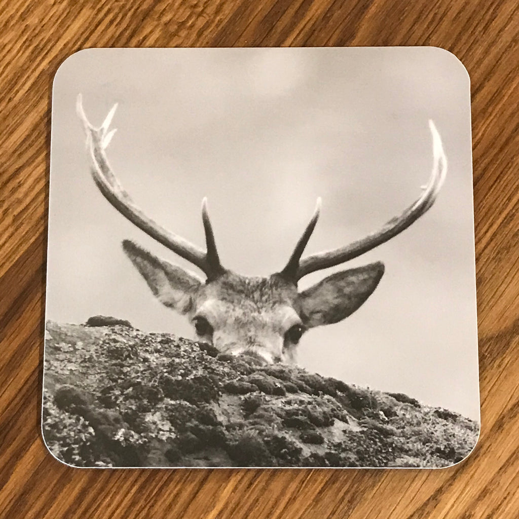 Highland Stag Peeking Coaster