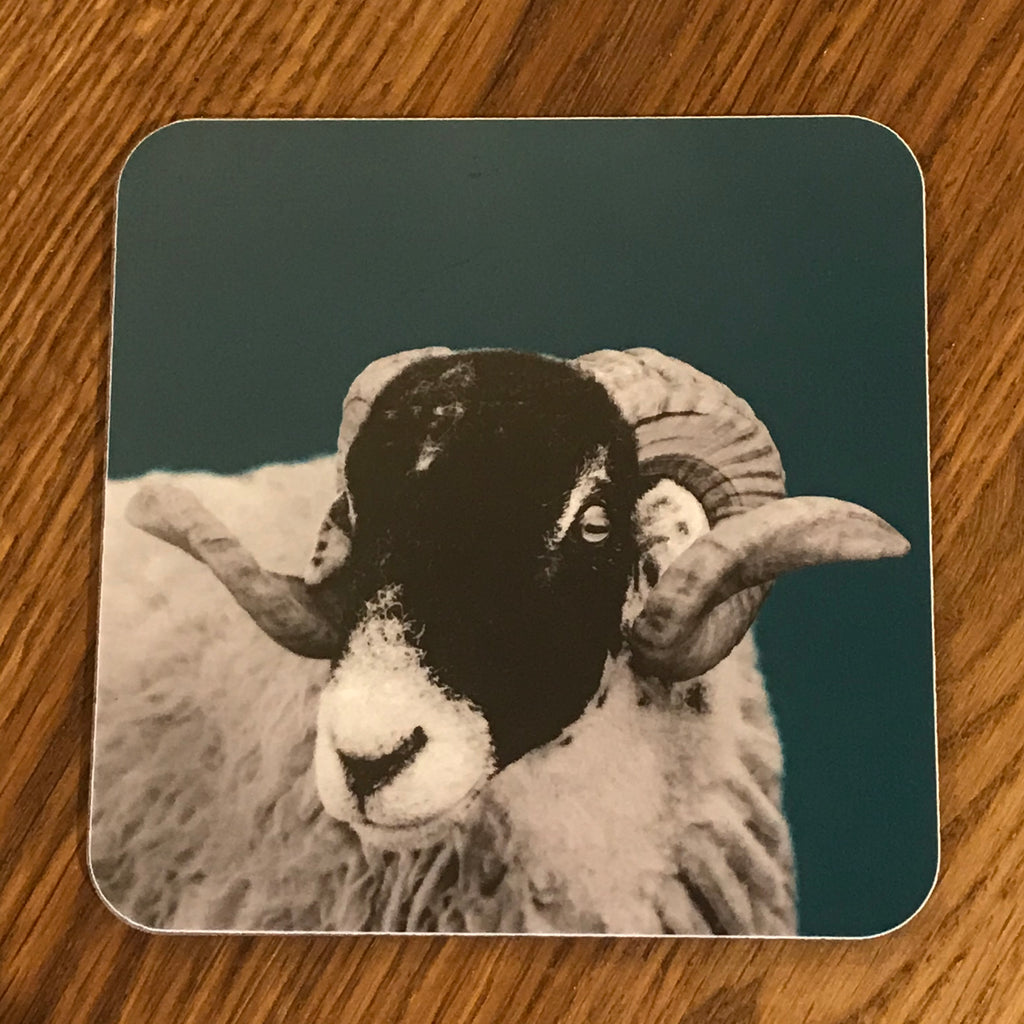 Swaledale Sheep Coaster - Teal
