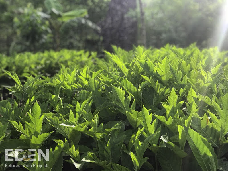 Announcing Our Partnership With Eden Reforestation Projects