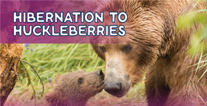Hibernation to Huckleberries: Bear Cubs