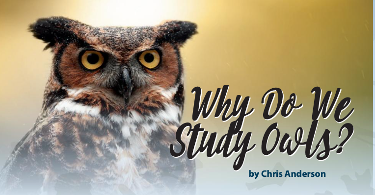 Why do we study owls?
