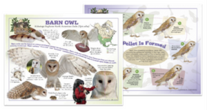 Barn owls help farmers save time and money. Learn how.
