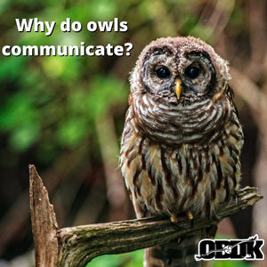 Why do owls communicate?