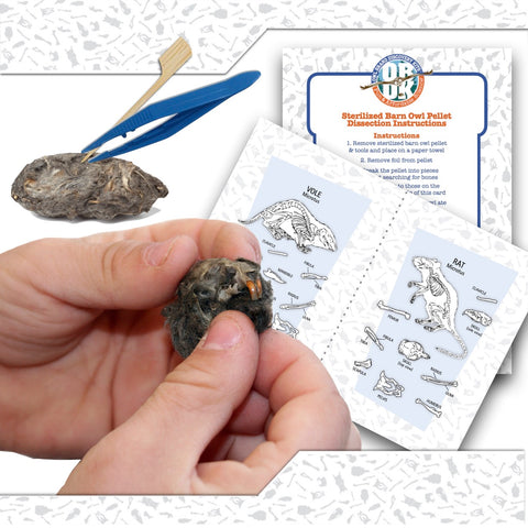 Owl Pellet 1 Pack + Tools + Charts (Ships to Teacher)