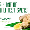 Ginger – One of the Healthiest Spices