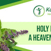 Holy Basil – A Heavenly Herb