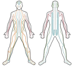 Meridian lines in the human body