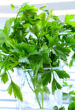 Perfect Parsley-Herbs-The Indian Organics