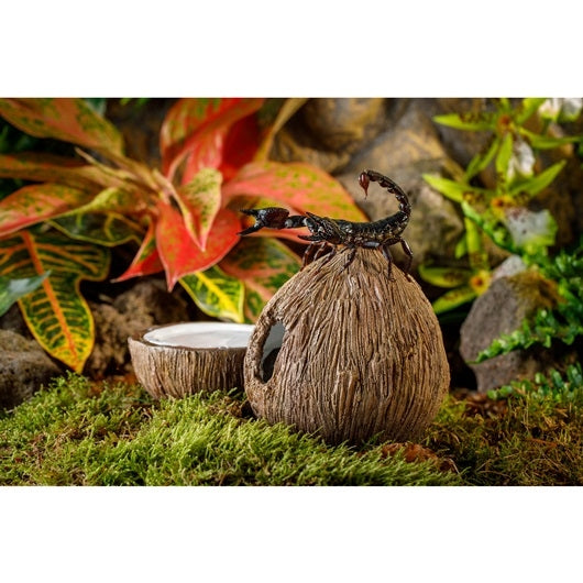 Exo Terra Coconut Hide with Water Dish for Reptiles