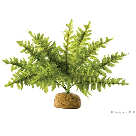 Exo Terra Rainforest Plant - Boston Fern - Small