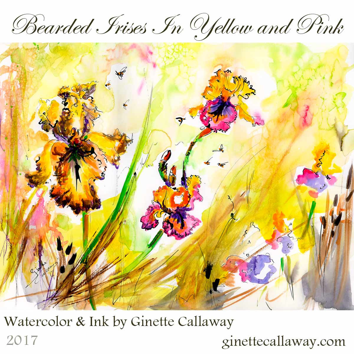 Bearded Irises with Pink and Bees Watercolor and Ink Original Painting