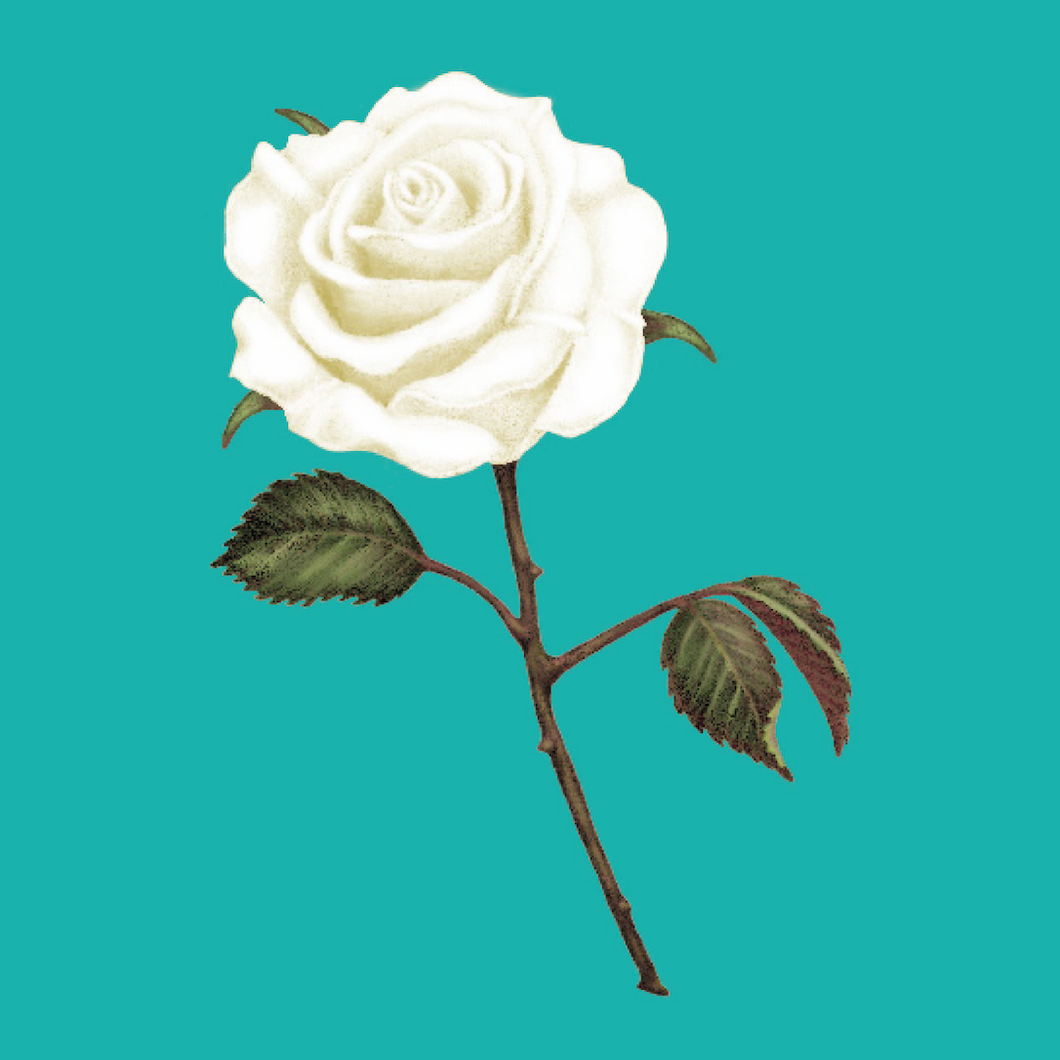 White Rose Greeting Cards - Pack of 20 - bekindbeflorence