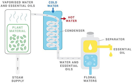 Essential Oils Steam Distillation Flow Diagram