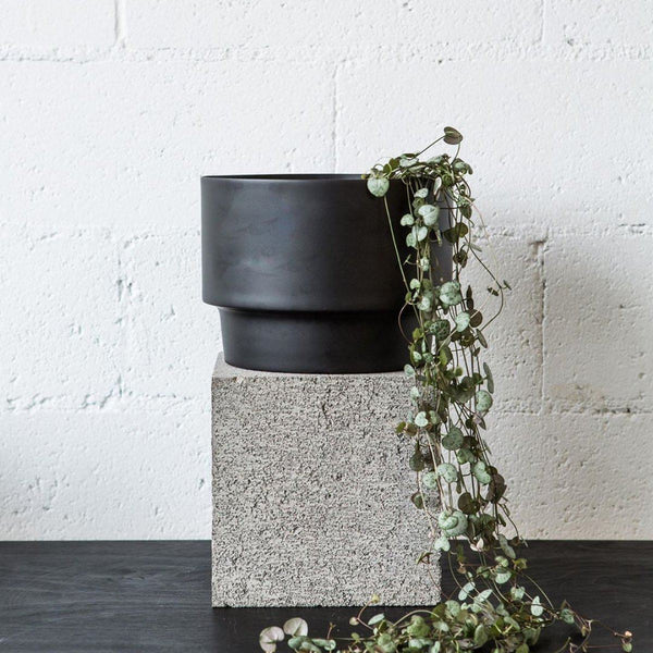Century Pot | Black Planter Behr & Co