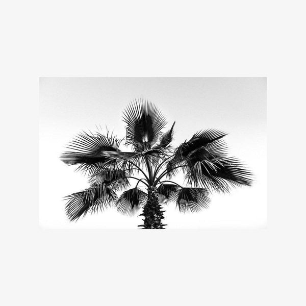 Palms Photography Christine Mueller