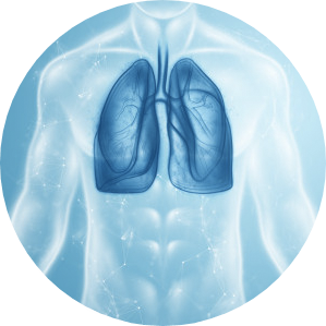 Helps to curb lung infections